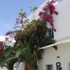 Blumen in Agua Amarga