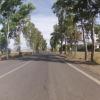 Baum-Allee bei Villaricos