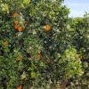 kleiner Zwischenhalt in der Orangenplantage