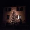 Weihnachtsbaum in Ehrendingen