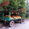 Der Kürbiswagen