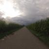zwischen den Maisfeldern