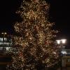 Weihnachtsbaum in Brugg