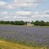 Blumenfeld im Centre-Val de Loire