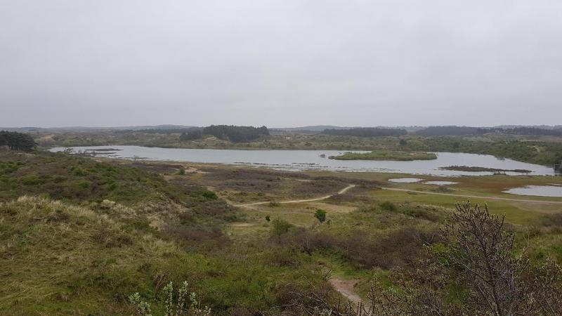 Dünenwanderung im Nationalpark Zuid-Kennemerland