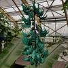Im botanischen Garten von Leiden