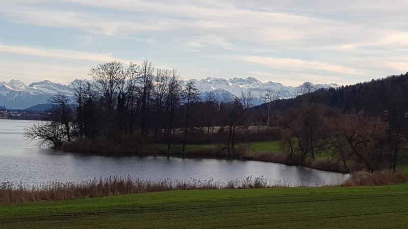 Baldeggersee und Alpen