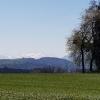 Blick zum Alpenkamm, bei Inwil