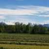 Emmen-Dorf, Blick zu den Alpen hinüber