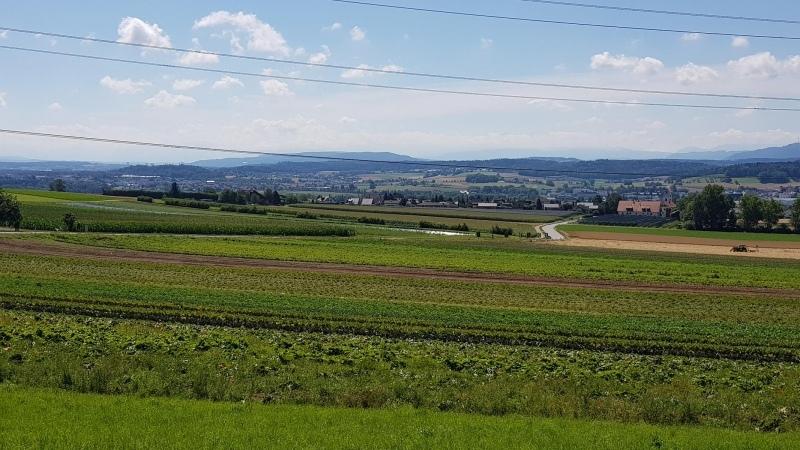 Blick oberhalb Steinmaur über das Neeracher-Ried in Richtung Flughafen