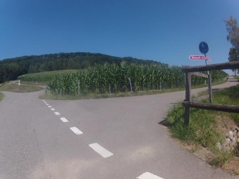 vom Rheintal in Richtung Neeracherried
