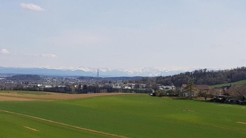 Blick zu den Alpen, Nähe von Steinmaur / Dielsdorf