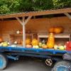 Kürbiswagen bei Dielsdorf