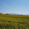 Blick zu den Alpen
