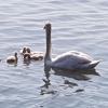 Schwanden-Familie an der Rhone