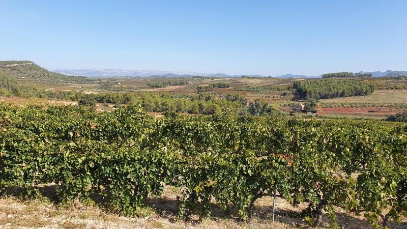 Ebene zwischen Marca und Tivissa