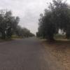 Zwischen Olivenbäumen ins Hinterland