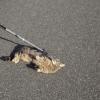 Spielfreudige Katze auf dem Dammweg