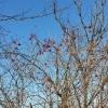 Rote Beeren unter blauem Himmel