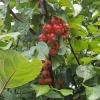 Herbst am Klingnauer Stausee