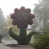 Riesenblume