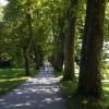 Platanenweg