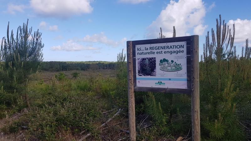 Wald-Regeneration