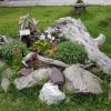 Roseg, Unkraut für Seltbstpflanzer