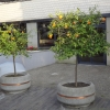 Orangenbäume vor dem Hotel