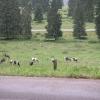 erwartet habe ich Pferde nicht Kühe im Jura