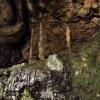 Stalagnitten in der Beatus-Höhle
