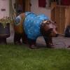 Bären in Andermatt