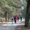 Viele Kiefer-, Arven- und andere Nadelholzwälder laden zum Wandern und Flanieren ein.
