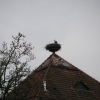 Storch auf einem Hausdach