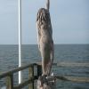 Vineta, die Meeresjungfrau aus der versunkenen Stadt