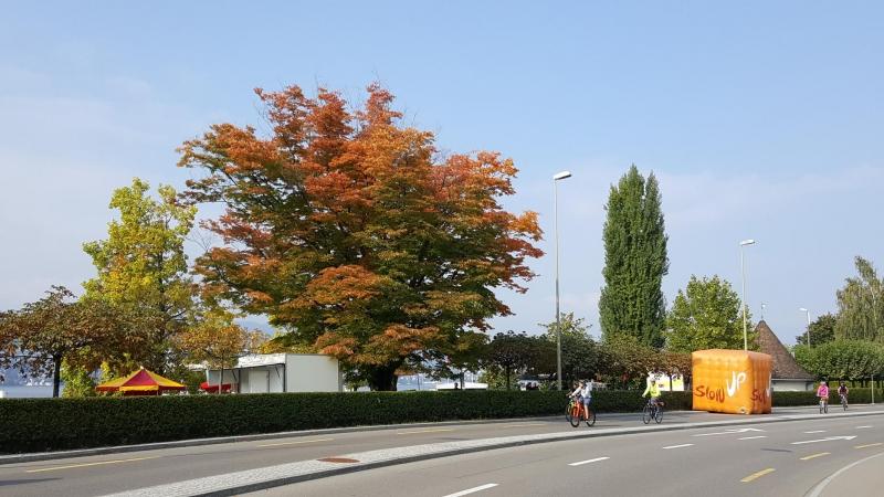 SlowUp am Zürichsee