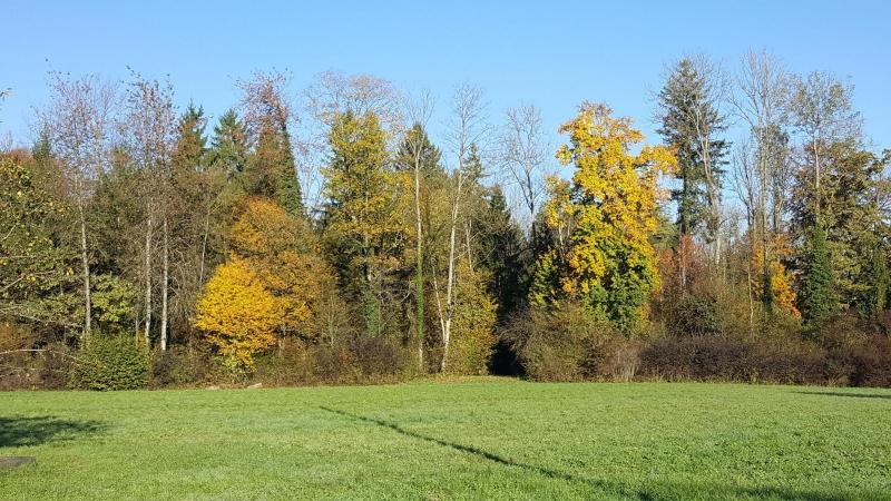 Heimberg, herbstlicher Wald