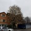 Weihnachtsdeko in Erlenbach