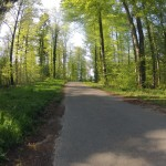 Frühlingswald am Katzensee
