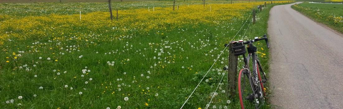 Frühlingswiese im Surbtal