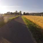 Getreidefeld in der Morgensonne