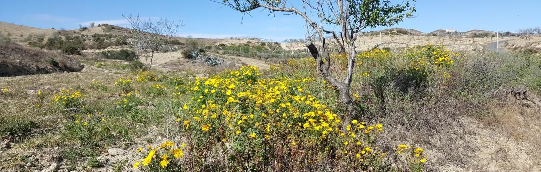 Frühling in der Sierra Cabrera