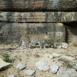 Ausschnitt aus dem Besuch im Tierpark Dählhölzli in Bern