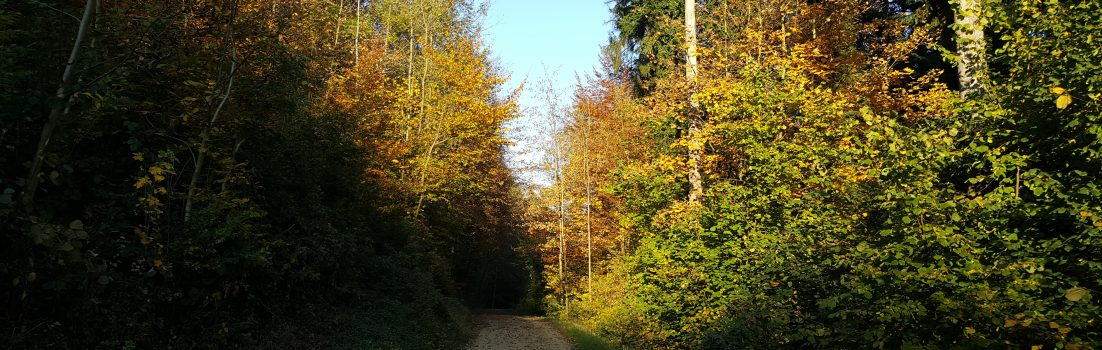 Bruggerwald