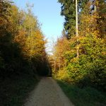 Entlang der farbenen Blätter
