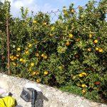 Zwischen Mandel- und Orangenbäumen hindurch