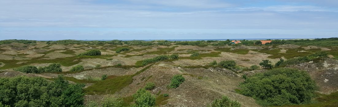 Dünenlandschaft auf Spiekeroog
