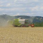 Hochbetrieb im Getreidefeld