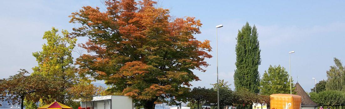 Herbst am Zürichsee