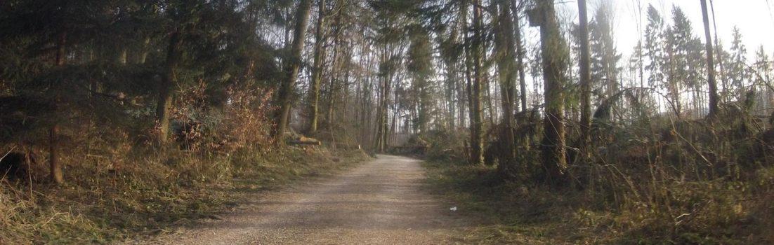 Im Wald nach Lenzburg